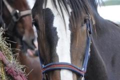 horses-(3)-1326537429
