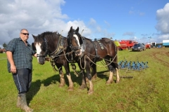horses-(4)-1351602803