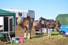 horses-(5)-1479307559
